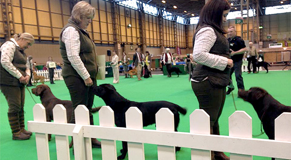 Crufts Gundog Ring