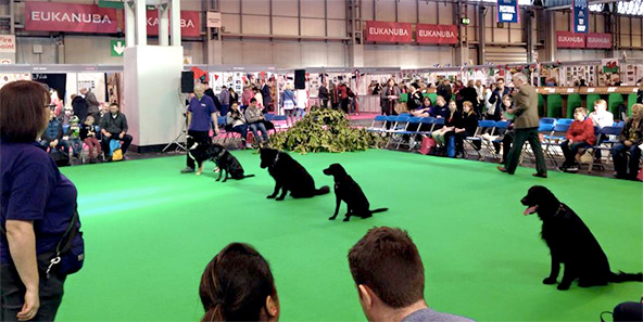 Crufts Working Trials Teams
